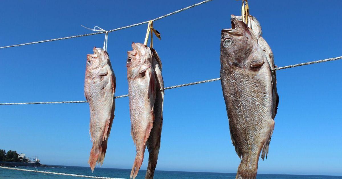 """В Мексике прошел """"дождь"""" из рыб"""