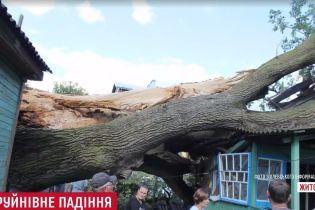 На Житомирщине ураган завалил на жилой дом 700-летний дуб