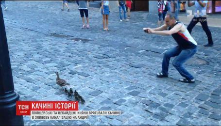 Трогательная спецоперация: на Андреевском спасли утку с птенцами