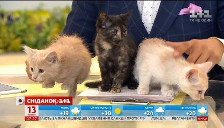 Трійко милих кошенят чекають на своїх господарів