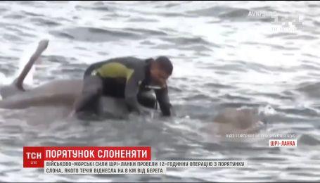 На Шри-Ланке спасли слона, которого унесло в море на 8 километров от берега