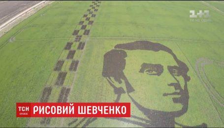 """На Херсонщине из черного риса """"вырастили"""" гигантский портрет Шевченко"""