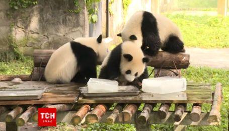 Работники китайского зоопарка помогают животным пережить невероятную жару