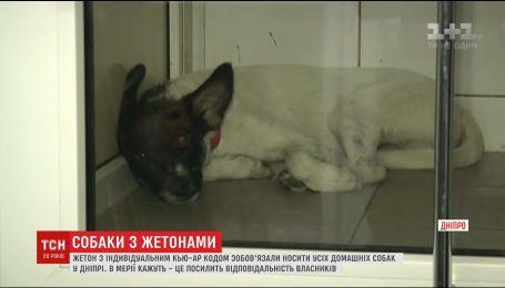 В Днепре владельцев собак обязали нацепить жетоны с информацией о четырехлапых