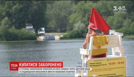 На пляжах Києва заборонили купатись через цвітіння води та підвищення вмісту кишкової палички