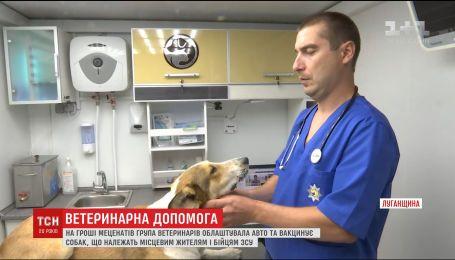Операционная на колесах: в зоне АТО начали работать ветеринары для бездомных собак