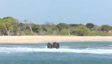На Шрі-Ланці врятували двох слонів, яких віднесло у відкрите море