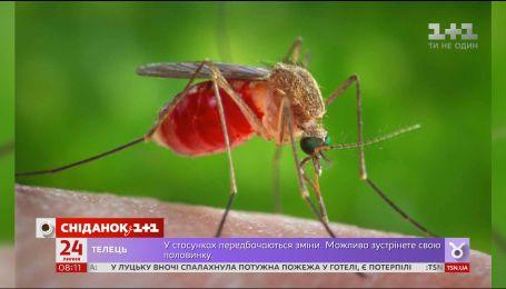 Кого найчастіше кусають комарі