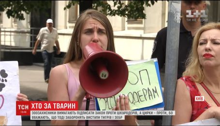 Зоозащитники и представители цирка поссорились во время митингов под АП