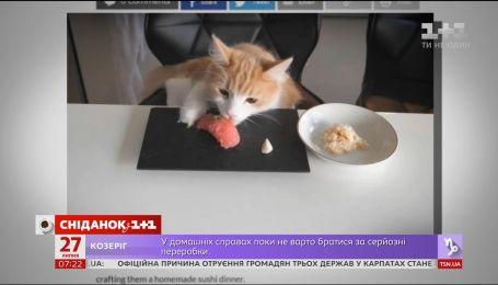 Відомий шеф-кухар з Японії розповів, як задовольнити смаки своїх котів