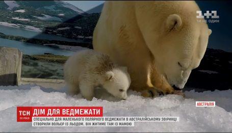 Специально для маленького медвежонка в Австралии построили вольер со льдом