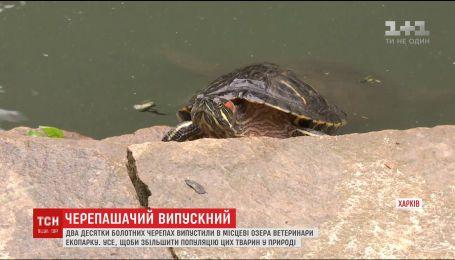 С Харьковского экопарка отпустили на свободу два десятка болотных черепах