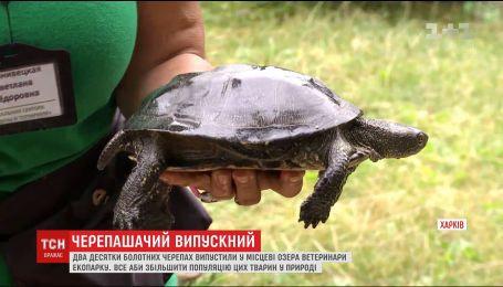 В Харькове после лечения отпустили на волю черепах, от которых отказались хозяева