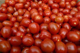 В Україні суттєво впали ціни на помідори