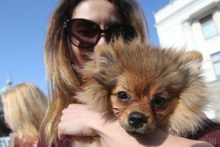Порошенко подписал закон, который позволяет сажать в тюрьму за издевательство над животными