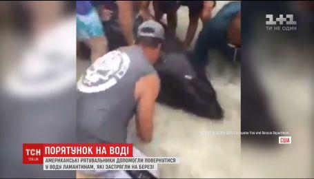 Рятувальники Флориди допомогли повернутися у воду ламантинам, які застрягли на березі