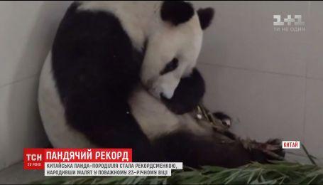 Чорно-біла ведмедиця із китайського зоопарку стала найстарішою мамою свого світу