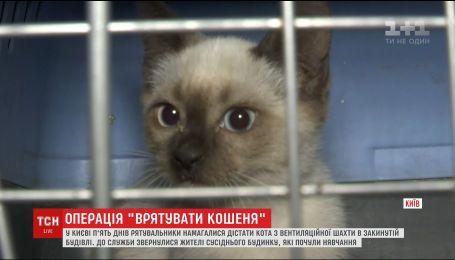У столиці влаштували спецоперацію із визволення кошеняти