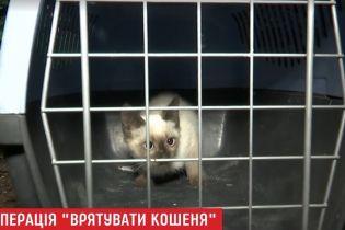 В Киеве 6-летнюю девочку заподозрили в жестоких издевательствах над животными
