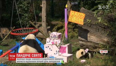 У Віденському зоопарку відзначили день народження панд-близнят