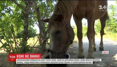 В Одесі зоозахисники вимагають покарання для тих, хто використовує тварин з комерційною метою