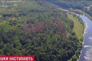 Ліс ціною в мільярди: всі українські дерева можуть віддати в концесію