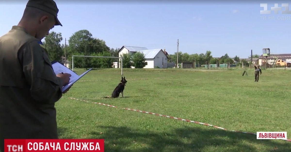 Служебные собаки Нацгвардии собрались на зрелищный турнир