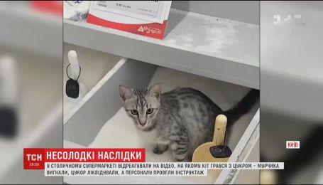 Кота, который нагадил в сахар, приютила работница супермаркета
