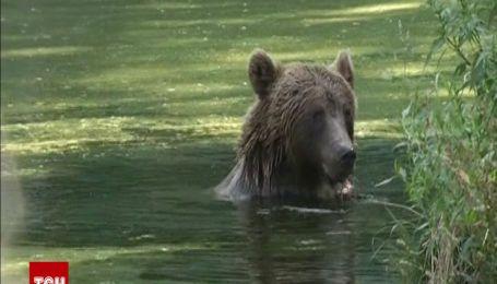 Життя ведмедів у центрі реабілітації на Житомирщині