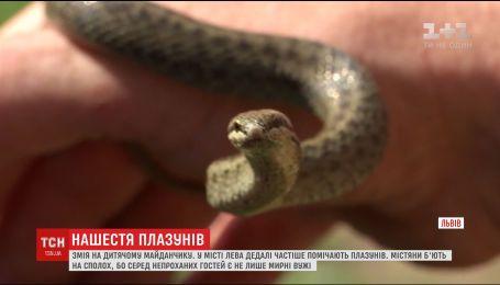 Метровая змея приковала внимание школьников вблизи детской площадки