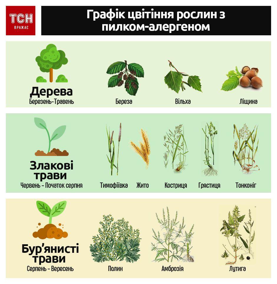 Алергія інфографіка_1