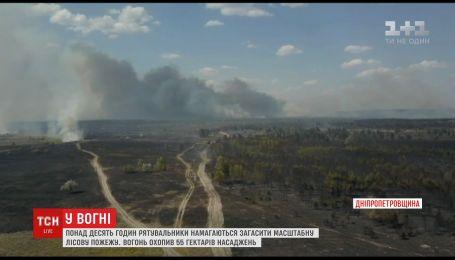 На Днепропетровщине уже 10 часов пытаются потушить лесной пожар