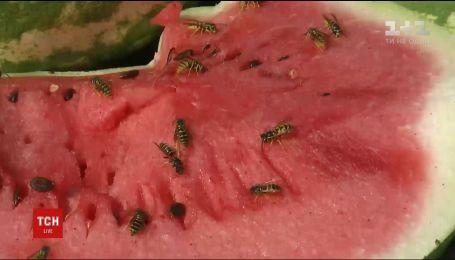 Эксперты рассказали, какие покупать арбузы, чтобы избежать пищевых отравлений