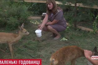 Лісники знайшли та вигодували покинутих дитинчат косулі на Кіровоградщині