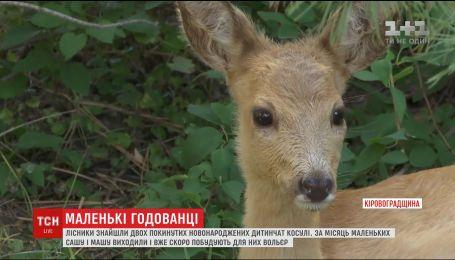 Лісники Кіровоградщини знайшли двох новонароджених покинутих дитинчат косулі