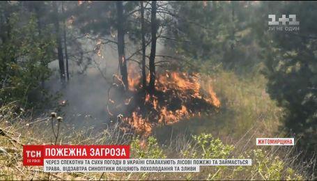 Человеческая халатность и погода: украинцев предупреждают о наивысшем уровне пожарной опасности