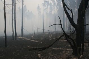 Порошенко подписал закон об усилении ответственности за незаконную рубку леса