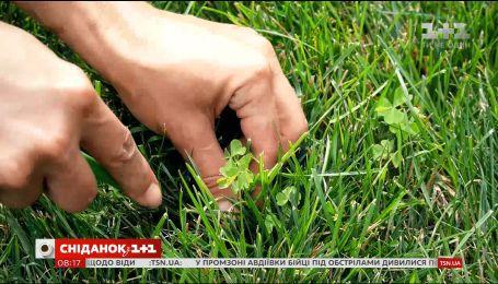 Як створити ідеальний газон
