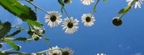 Сухо та сонячно: якою буде погода в Україні 16 серпня