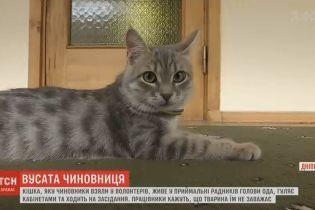 """В Днепропетровской областной администрации """"работает"""" самая настоящая кошка"""