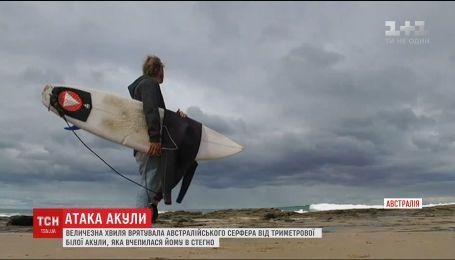 Австралийский серфер чудом спасся от трехметровой акулы, которая вцепилась ему в бедро