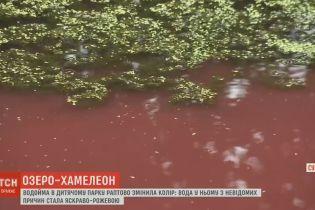 В Сумах люди напуганы розовым цветом местного водоема