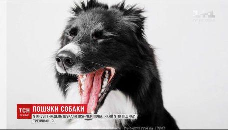 В Киеве в течение недели искали пса-чемпиона, который сбежал во время тренировки