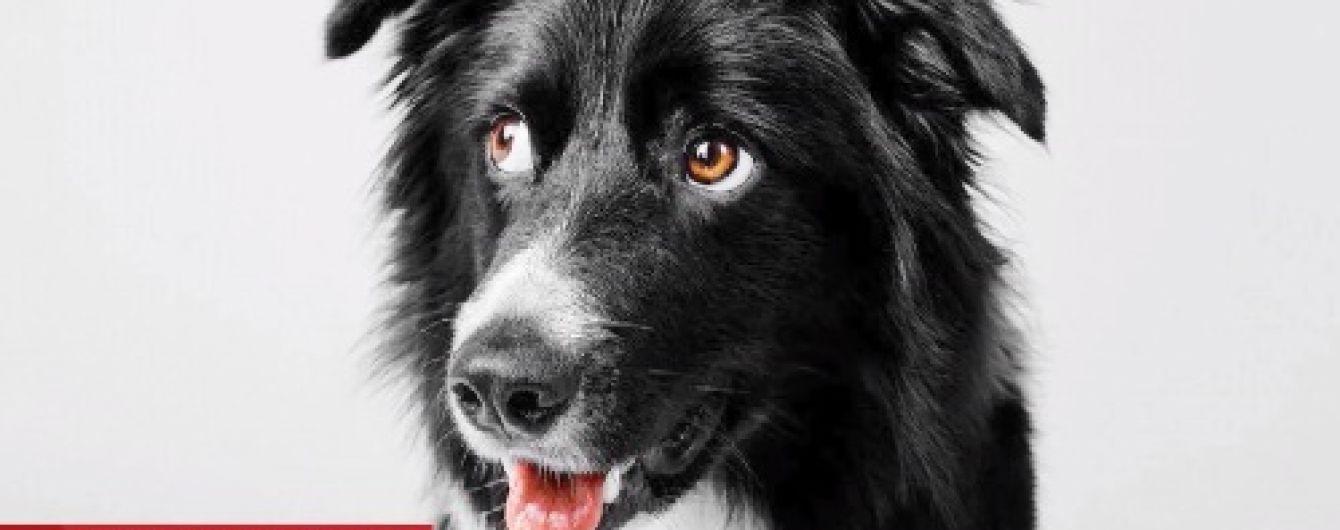 В Киеве целую неделю искали собаку-чемпиона, которая внезапно сбежала с тренировки