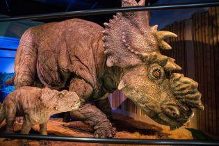 У Колорадо під час закладання фундаменту неочікувано відкопали динозавра