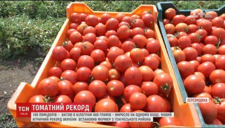 На Херсонщині встановили аграрний рекорд - 165 помідорів на одному кущі