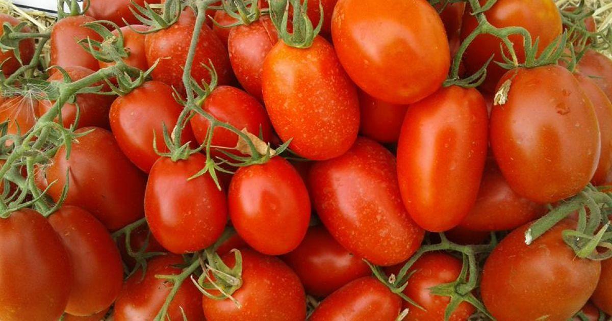 Дешевшими вже не будуть. Скільки коштують помідори й коли ціни поповзуть угору