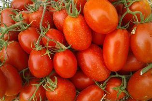 В Украине резко подорожали помидоры