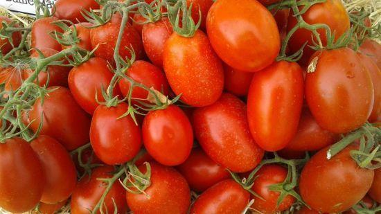 Через негоду в Європі в Україні зростуть ціни на імпортні помідори