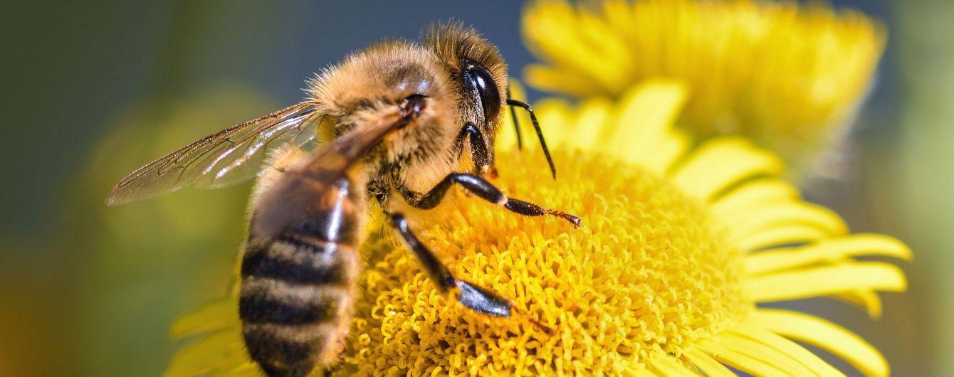 В ЕС назвали и запретили пестициды, которые убивают пчел